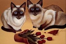 Cats / by Michele Carlson