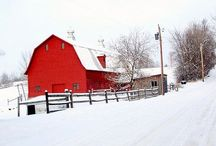 Barns / by Ingrid Duffy