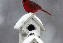 Bird houses / by Ingrid Duffy