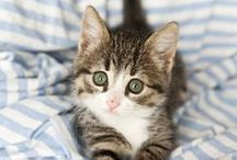 Charming pets / by Ania Liberadzka