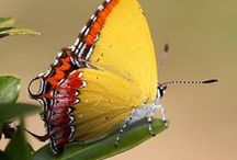 "Beauty of a Butterfly / ""Butterflies are self propelled flowers.""  ~R.H. Heinlein"