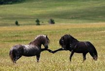 ~HORSES... / Various types of horses, from the largest most majestic...to the cute, smaller horse type.  / by R.J. Miller