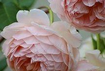 Flower Power / inspirations for my own beautiful garden / by Maggie Schildmeyer