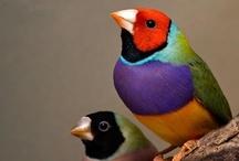 Pretty bird / by Lauren Kittengloves
