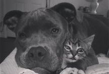 Severe pittie obsession <3