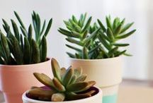 be a | gardenista / by Abby Hamilton