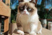 ~MR. & MRS. GRUMPY CAT...