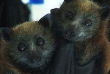 BATS / EVERYTHING BATS<3