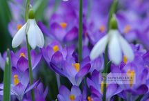 Bring on Spring! / Spring.....this is really the most wonderful time of the year!!!