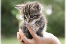 Kitty Kitty Kitty Cat / by 耕司 吉野
