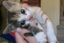 lovely-kittycats 3 / by 耕司 吉野