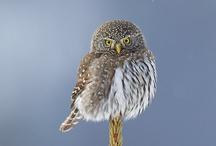 """OWL"" always love you"