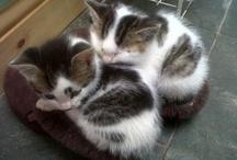 lovely-kittycats 4