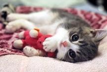素敵-kittycats 5