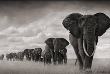 Elephants / by Zandra Burt
