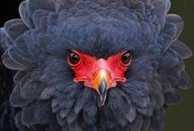 Birds / by Zandra Burt