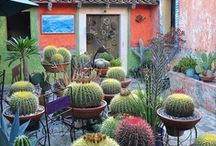 Desert landscaping and Plants / by Amber Rose