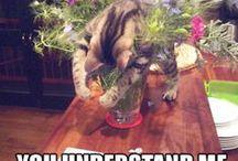 Hilarious animals