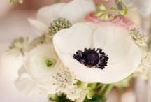florals / by Blynda DaCosta