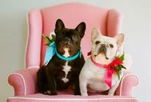 Pampered Pets / Supplies, toys, homes and gifts for your pampered pets.  / by ATGStores.com