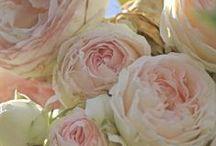 Blush Colour Stories / Blush = ivory-peach / by NexTrend Design (Ellie Hanson)