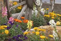 gardens | growing things