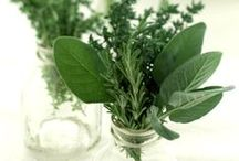 encyclopedia of herbs / A collection of herbs and their use
