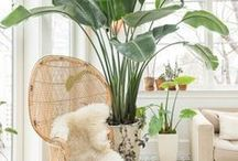 Plant Styling. / Beautiful inspiration on how to thoughtfully incorporate plants into your home.