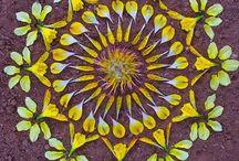 flora / by Diane Bowler