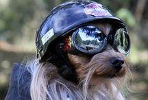 Pets named Harley! / by Hal's Harley-Davidson