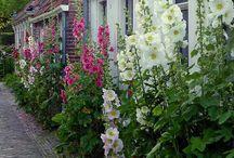 gardens / by Diane Bowler