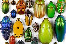 beetles / by Diane Bowler