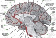 || The Brain ||