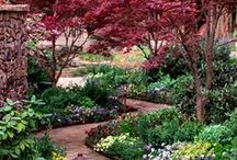 My Garden / by Amylynn Waters