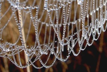 Beautiful Spiderwebs