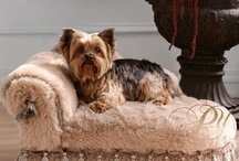 Great items for your animal companions / by Janet Dobbs