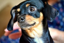 The dog / Set di scatti fotografici in interno. Soggetto: un meticcio di un anno e mezzo. Concept: http://www.barbaragozzi.it/2012/09/the-dog/