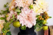 The beauty of flowers / by Debbie Blakley Preston