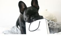 F r e n c h i e L o v e / French Bulldogs, French bulldog puppies, puppies & dogs