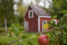 Sweet Country Orchard
