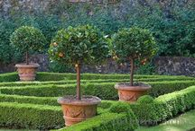 Gardens / Boxwood ~ Potted Plants & Trees ~ Pots & Tools ~ Shrubs / by ~ Amy ~