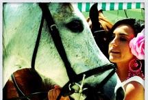 Feria de Mayo 2012 / Del 9 al 13 de Mayo se celebra este año la Feria de Mayo en Torrevieja. Una gran oportunidad para bailar, reir, admirar los pasacalles de caballos y en definitiva, pasarlo bien