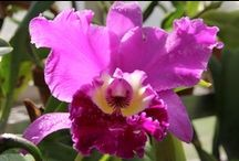 ** orchids ** / by Maggie