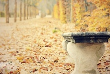 Autumn / by Lo Charme