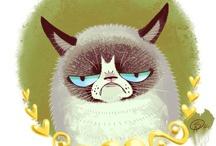 Grumpy Cat! / by paige =^..^=