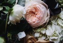 botanical / by Macey Fernandez