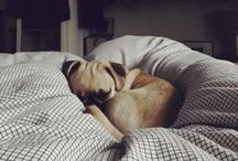 pugs / by Macey Fernandez