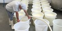 Making cheese / Production of our award-winning cheeses, Bath Soft Cheese, Wyfe of Bath and Bath Blue.