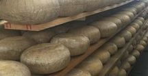 Maturing cheese / Cheeses in various stages of maturity in the ripening rooms.