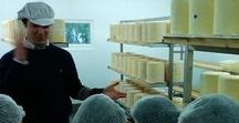 Dairy tour / Come and see our milking parlour and cheese dairy - great for school trips and foodies!